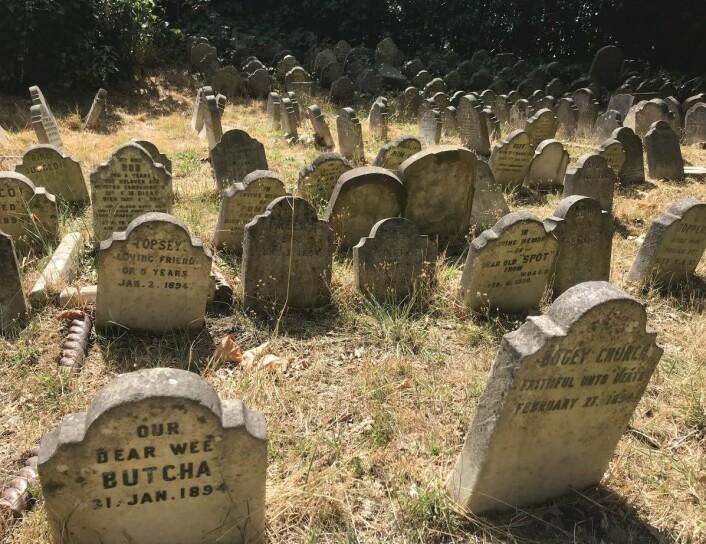 Et annet eksempel på graver fra Hyde Park-kjæledyrskirkegården.