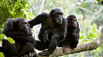 Aper bryr seg ikke om rettferdighet