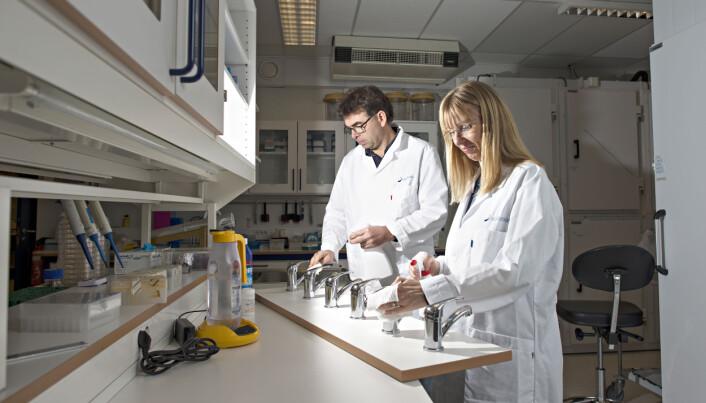 Forskerne Trond Møretrø og Solveig Langsrud undersøker kjøkkenhygiene i europeiske hjem, og ser at de fleste vasker kjøkkenbenken rett etter matlaging.