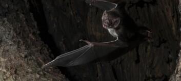 Vampyrer holder også avstand når de er syke