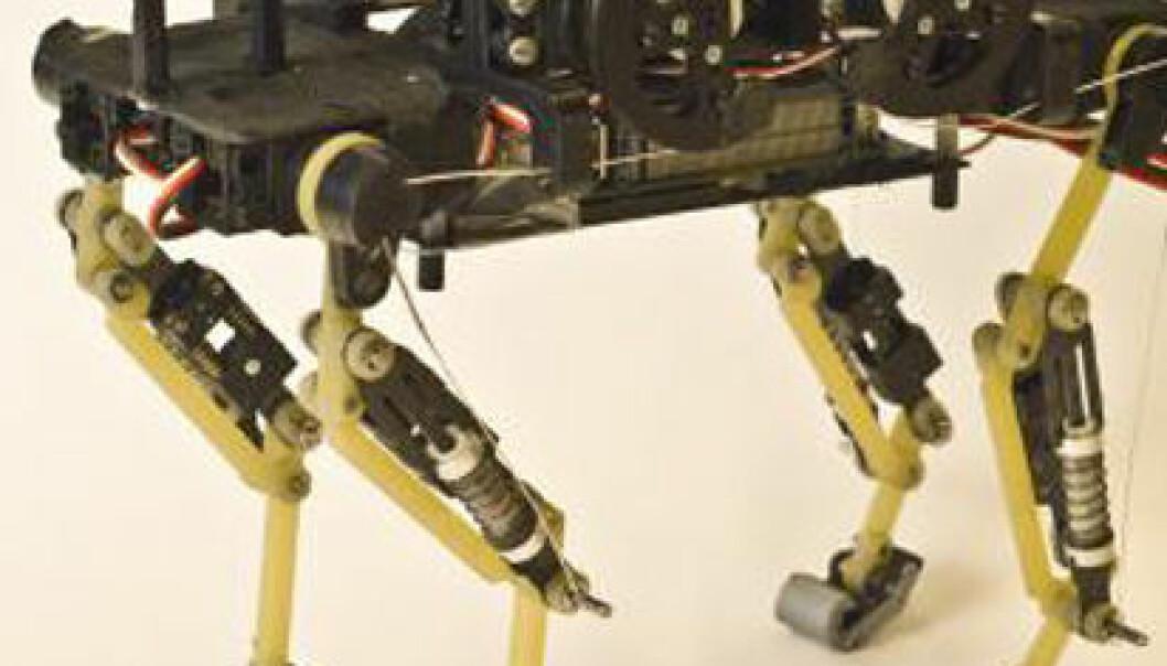 Roboten deler noen av trekkene med en ekte katt ved å være liten, og løpe ganske raskt og smidig. Hodet mangler derimot, slik at mjauing og andre lyder eventuelt gjenstår. EPFLnews