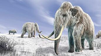 Mammuten spiste seg gigantisk på urter