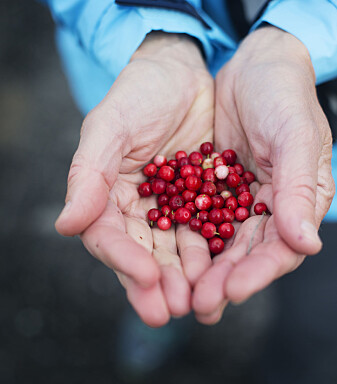 Ei hand full av selvplukket tyttebær kan bringe fram gode minner.