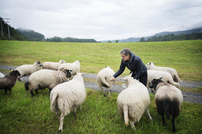 Fôring og stell av dyr oppleves av mange som meningsfullt. (Foto: Martin Lundsvoll / Aldring og helse)