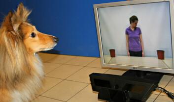 Hmmm...nettopp, akkurat ja, jeg skjønner....Motiv fra forskernes forsøk med videosnutter, for å se hvoran hunden reagerte på blikk. (Foto: Current Biology, Téglás et al.)
