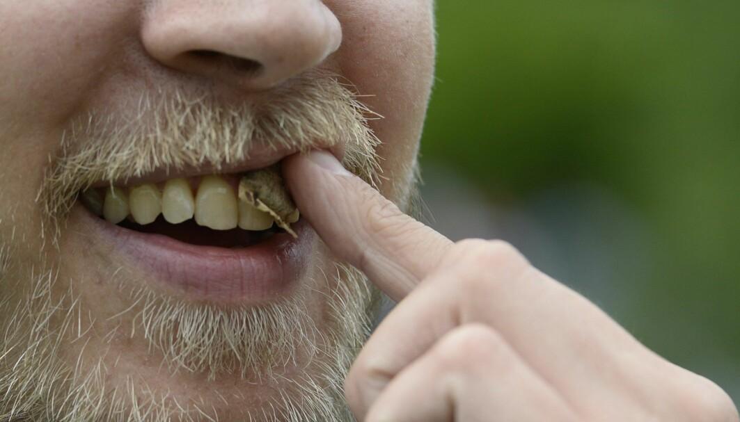 Snusing har blitt vanligere enn røyking blant norske menn, ifølge tall fra Statistisk sentralbyrå.