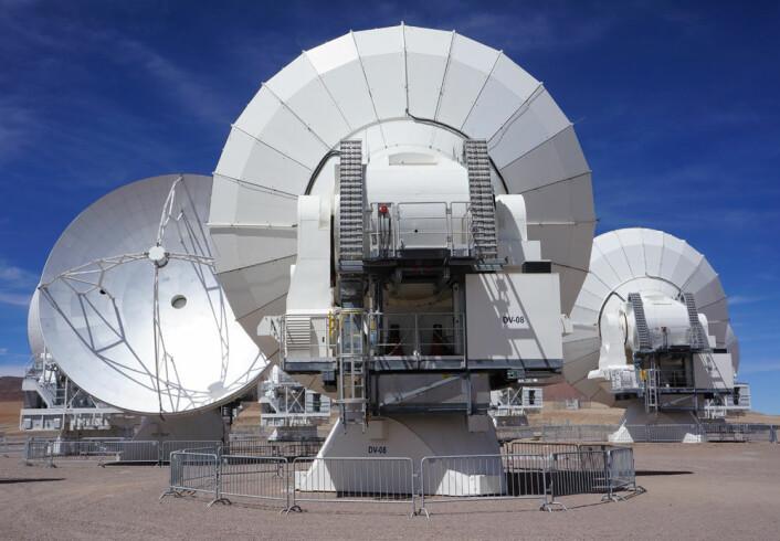 Tre antenner slår av en prat mellom slagene. (Foto: Arnfinn Christensen, forskning.no)