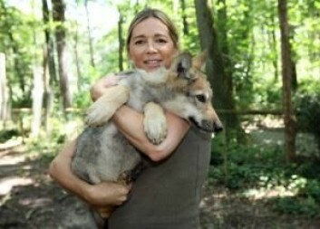 Før hundene var ulvene menneskets beste venn. (Foto: Colourbox)