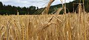 Nye kart viser hvor det kan dyrkes mer korn og gras
