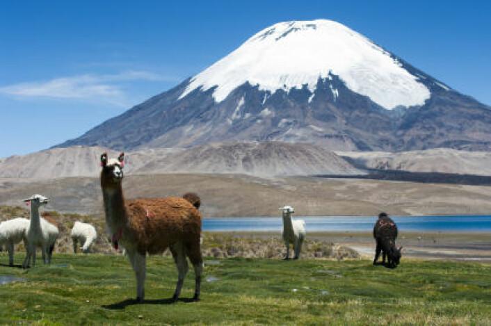 Andesfjellene er et godt eksempel på et område hvor det finnes mange dyrearter med liten spredningsevne. Andesfjellene har historisk sett ikke vært rammet av store klimaendringer, og når klimaet endrer seg, kan dyrene flytte opp eller ned. (Foto: iStockphoto)