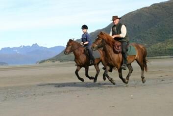Nordlandshest/lyngshest er den nasjonale rasen med flest bruksområder, slik som kjørehest, kløvhest, turhest, ponnitrav og trekkhest. (Foto: Ridehesten)