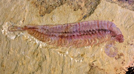 Denne ur-reka fyller et hull i evolusjonen, ifølge forskere