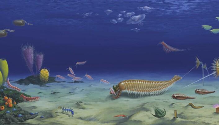 Her er dyret i sitt naturlige habitat, for rundt en halv milliard år siden. Slik en kunstner ser det for seg.