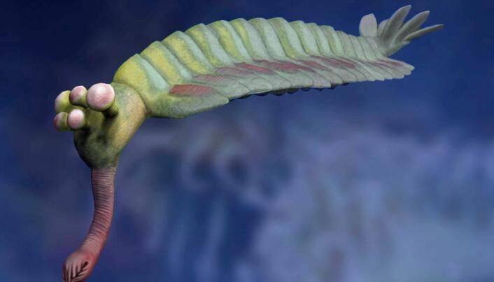En rekonstruksjon av Opabinia. Den er også noen centimeter lang