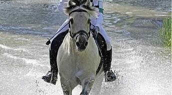 Krise for norske hesteraser