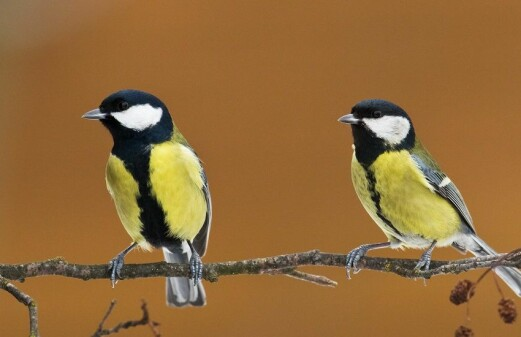 Bird species more likely to die out with rapid climate change