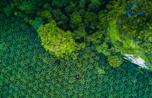 Agriculture eating into biodiversity hotspots worldwide