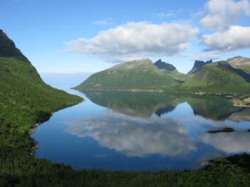 Himmel og hav! Bjørkeskog på Senja i Troms. (Foto: Arne Steffenrem/Skogfrøverket/Skog og landskap)