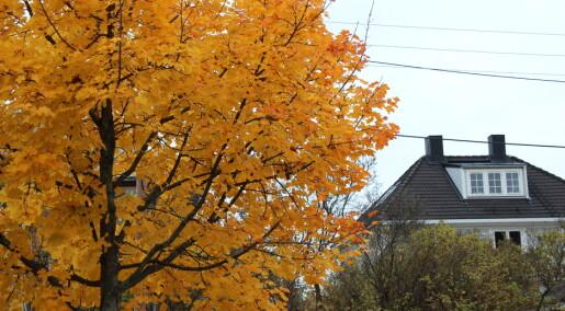 Har høsten vært blassere i år?