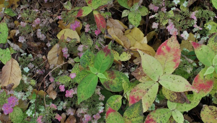 Høsten er en eksplosjon av fargekombinasjoner og detaljrikdom. Nesten synd at vinteren snart kommer som et viskelær.