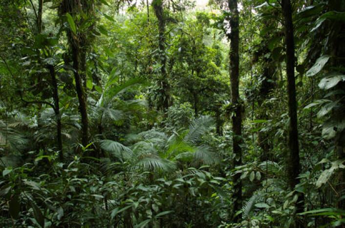 En tropisk regnskog inneholder trolig millioner arter av planter, dyr og mikroorganismer. Å kartlegge økosystemet ved å finne alle disse artene, blir som å finne temperaturen i vann ved å kartlegge bevegelsene til hvert enkelt vannmolekyl. (Foto: Pedro Jordano)