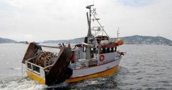Mange rekefiskere har hatt noen tøffe år bak seg, med dårlige fangster. Men nå ser det ut til at bestanden i Skagerrak tar seg opp igjen. (Foto: Øyvind Berg, Havforskningsinstituttet)