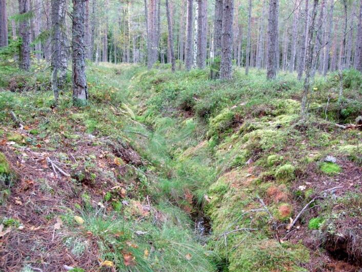 Forsøksfelt for myrforskning. (Foto: Gunnhild Søgaard, Skog og landskap)