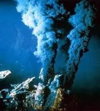 Rundt de undersjøiske varme kildene oppstår et helt særegent økosystem. (Foto: discoverytimes.blogspot.com)