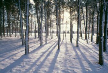 I Norden er sola kun noen få grader over horisonten i en tredjedel av tiden (hele året sett under ett). (Illustrasjonsfoto: www.photos.com)