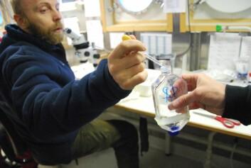 Fikk'n! Lars Naustvoll legger en hoppekreps av arten Calanus finmarchicus i flaska. Der skal hun være i 24 timer, og forhåpentligvis legge en hel masse egg. (Foto: Hanne Østli Jakobsen)