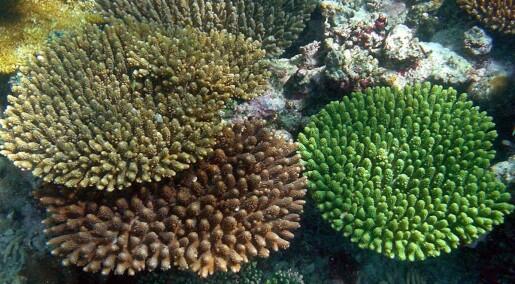 - Koraller blir friskere etter ti måneder i rent vann