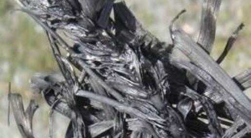 Mindre tungmetaller med biokull