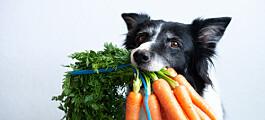 Kan hunden være veganer?
