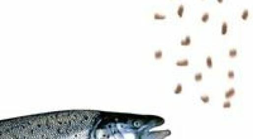 Syresalt og varme gir bedre fiskefôr