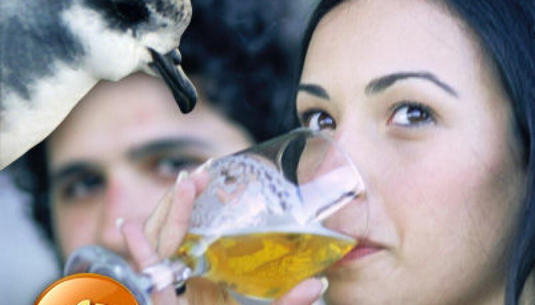 Ølhikke og fuglers luktesans
