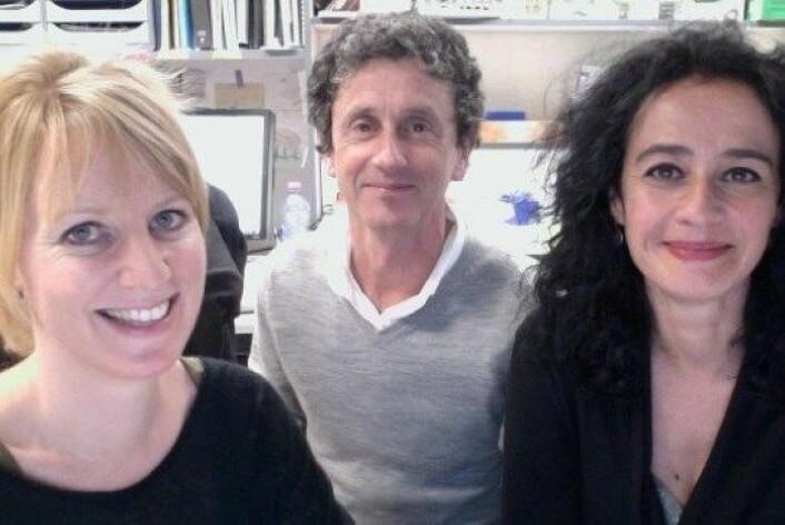 Post-doc-forskar Marianne Bjørndal Ganot, leiar Pierre Leopold og seniorforskar Nathalie Arquier. (Foto: IInstitut de Biologie Valrose (iBV))