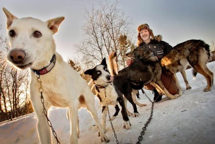 Hundeløp er ofte et helvete for deltakerne. Likevel opplever de en lykkefølelse, som gjør at de deltar år etter år. (Foto: Scanpix, Øyvind Nordahl Næss)