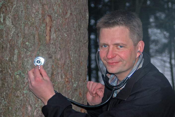 """""""Per O. Flæte sjekker kvaliteten på furutrær."""""""