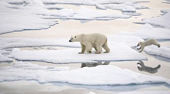Havets evne til å fange klimagassen CO2 er truet