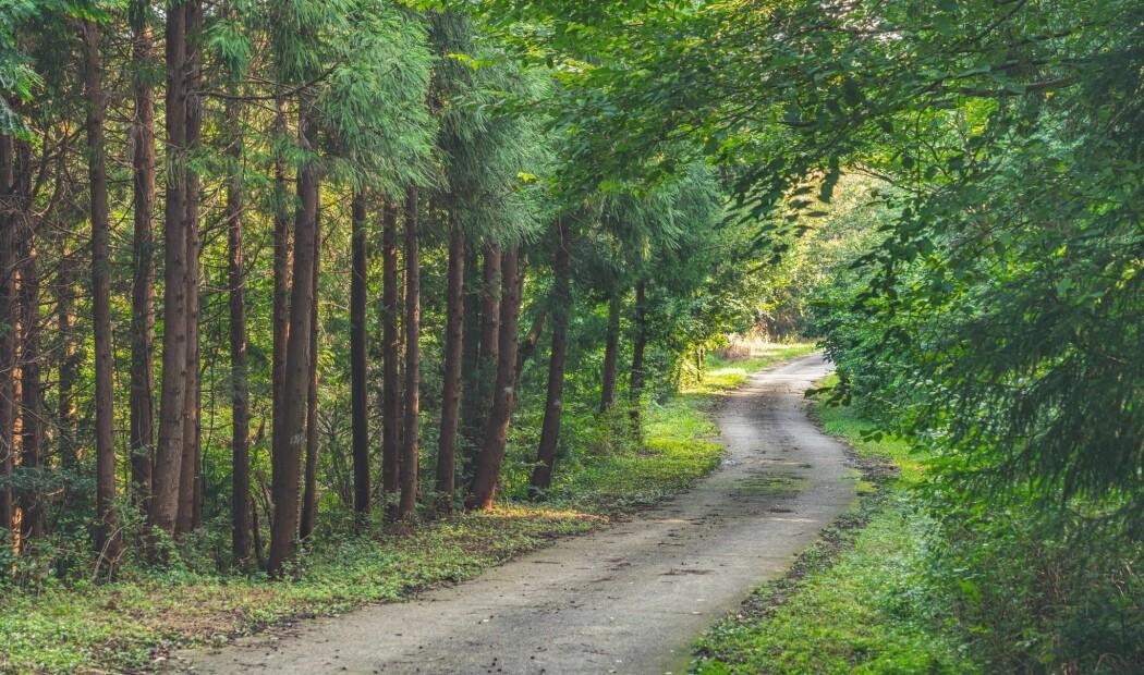 Skogens påvirkning på klima