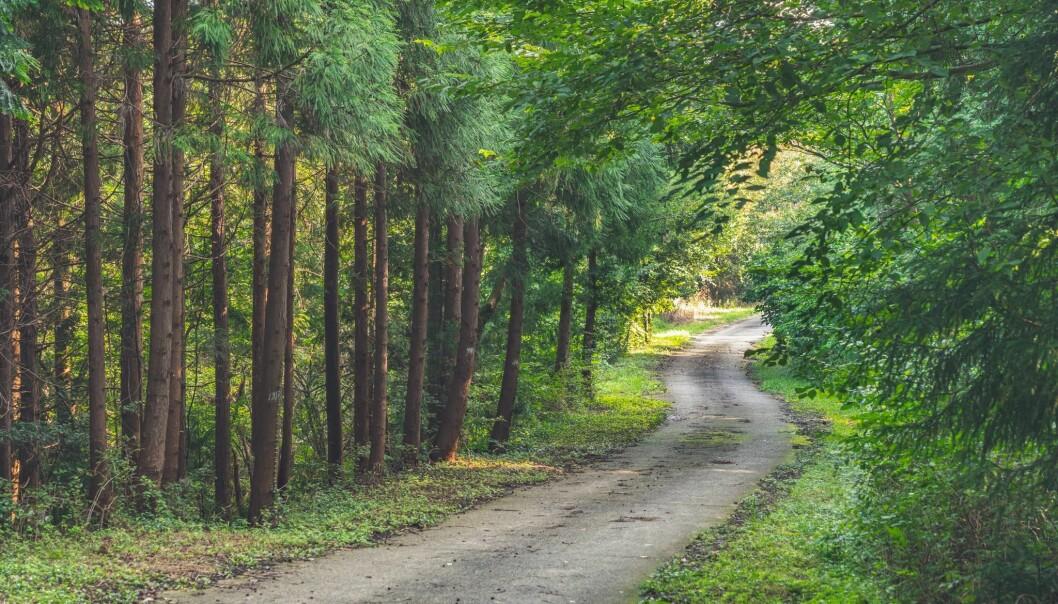 Skogen i Sør-Korea hvor Hanna Lee vokste opp