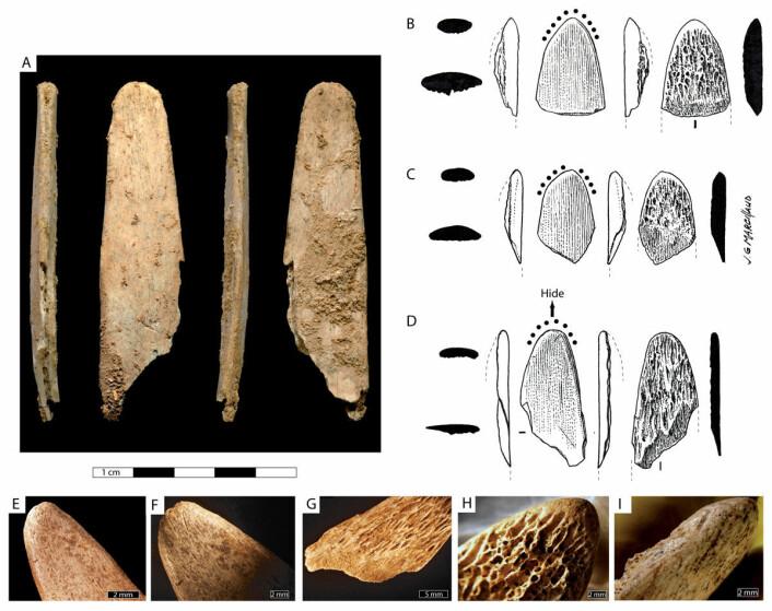 Nærstudier (nederst) av både det nesten komplette eksemplaret (øverst, til venstre) og de mindre fragmentene (til høyre) viser slitasje som tydelig indikerer bruktområdet. (Foto: Abri Peyrony & Pech-de-l'Azé I-prosjektene)