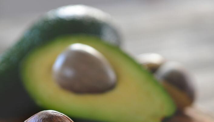 Hvorfor har egentlig avokadoen så digert frø? Møt plantene som mistet sine enorme partnere
