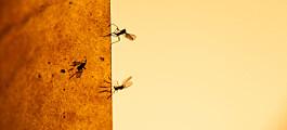 Dette kan du gjøre når en hær av mygg tar over hjemmet