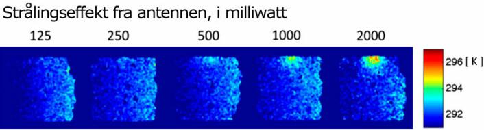 Forskerne David H. Gultekin og Lothar Moeller har målt varmen i hjernen som lages av strålingen fra en mobiltelefon. De har brukt en type magnetresonans-maskin og målt på en kuhjerne. Forskerne mener at metoden kan utvikles videre, slik at den også kan brukes på menneskehjerner. (Foto: (Figur: David H. Gultekin og Lothar Moeller/PNAS))