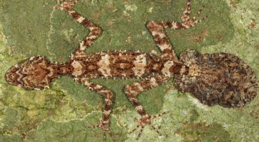 Topp 10: Nyoppdaga arter i 2013