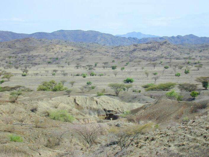 Disse sedimentene inneholdt 1,76 millioner år gamle håndøkser. I bakgrunnen vises fjellene vest for dagens Turkanasjø. (Foto: Rhonda L. Quinn)