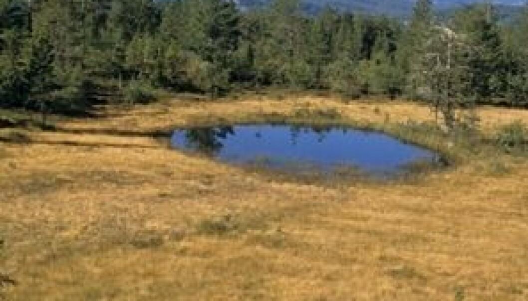 Myr og myrputt i høgtliggende furuskog. John Y. Larsson, Skog og landskap