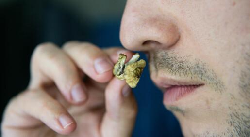 Tre ting forskerne har lært av forsøk med psykedeliske stoffer