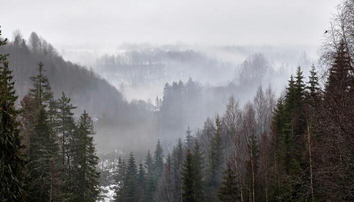 Mer rogn, osp og selje i skogen er blant det som trekker indeksen opp for de siste fem årene.